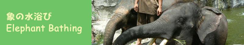 象の水遊び
