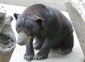 バリ動物園3
