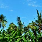 バリ島 観光 ゴルフ ゴルフ場 地図