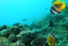 バリ島 観光 地図 ダイビング