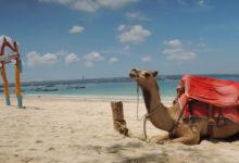 バリ島の綺麗なビーチをラクダに乗って散策できる、Bali Camel Adventure | バ