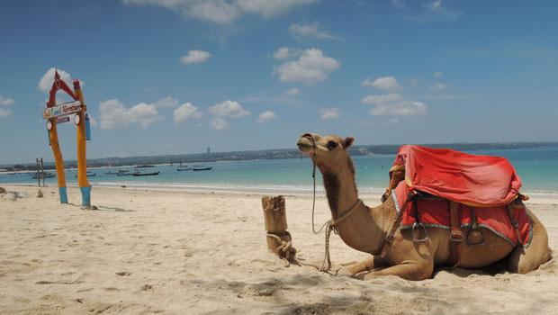2019年3月3日 ングラライ空港のすぐ近くにあるケラン・ビーチでラクダと散歩を体験してきました。 イカンバカールで有名なジンバランのビーチの一番空港よりのエリアにあるケランビーチ。すぐ側で航空機の離発着が間近に見ること...